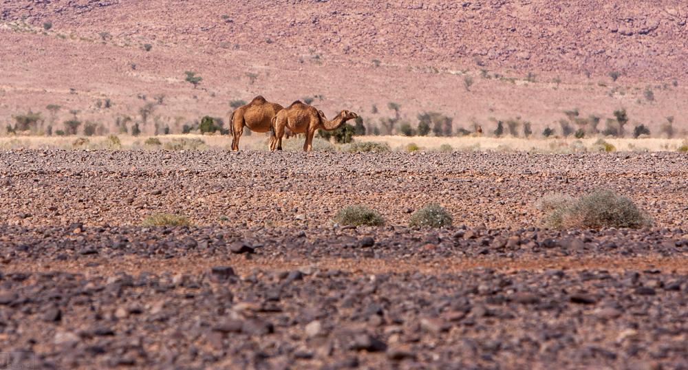 Marokko-6688