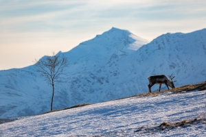 Tromsoe (19)