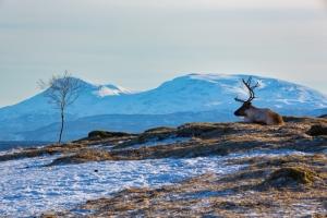 Tromsoe (20)