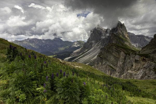 Seceda in den Dolomiten