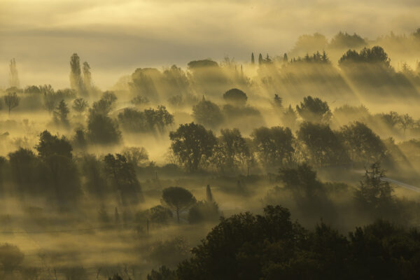 Provence--6
